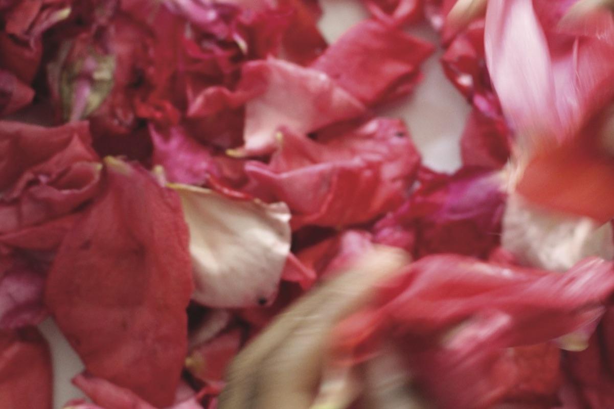 Rose Petals, 2018 | I Hope You Grow | Kids' Own Publishing Partnership