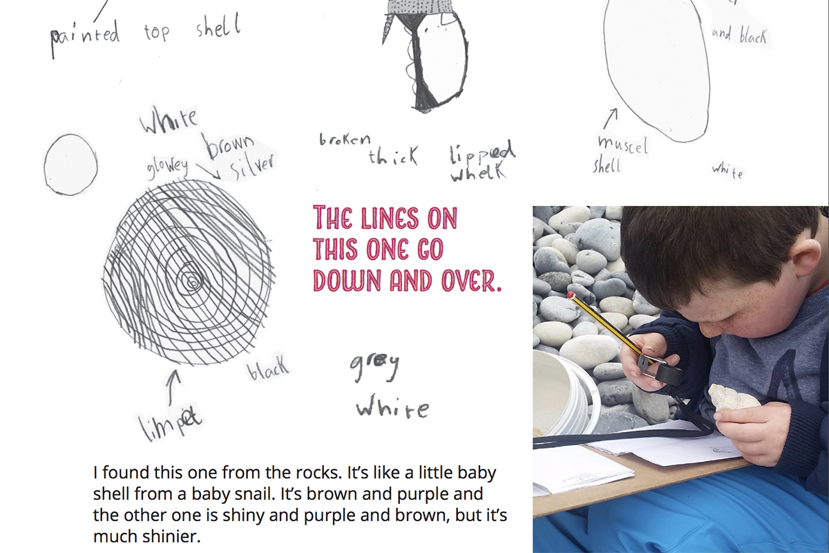 Cover of Beak like a banana - Kids Own environmental guide - drawings of shells